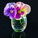 Pansies In Glass by Tom Newman