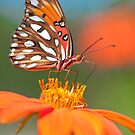 Orange Passion by Briar Richard