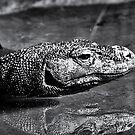 Komodo by Sandra Moore