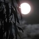 Full Moon through the Ghost Gum by Nicki Baker