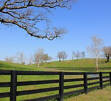 Bluegrass Region in Spring by Michael L. Colwell