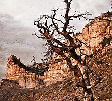 Lifeless Mesa Verde by RayDevlin