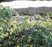 Spiderweb on the Ruins by britthebeast