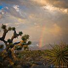 DESERT LIGHT by George Trimmer