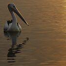 Sunglow by Graham Mewburn