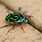 The Bug of Green and Black by Christopher McGrigor