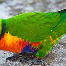 Bird Profile by Stefan Goldman