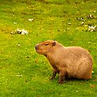  Capybara by Vac1