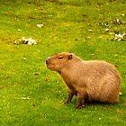 Capybara by Vac1