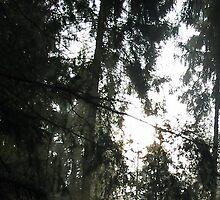 Morning Forest light by ienemien