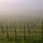 Morning Vineyard  by BalancedArt