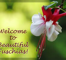 Beautiful Fuschias Welcome Banner by Tracy Friesen