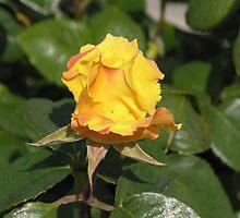 Yellow Rose Bud #2 by Sandra Gray