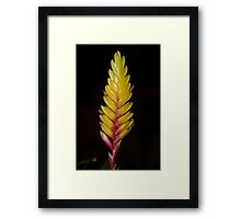 Bromeliad bloom Framed Print
