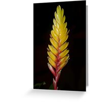 Bromeliad bloom Greeting Card