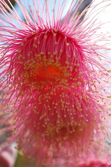 Splashes of Native Bloss (Eucalyptus Blossom) by Lozzar Flowers & Art