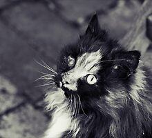 Fluff In Black And White by Josie Eldred