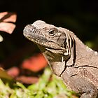 Iguana by vividpeach