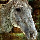 Equine by vigor