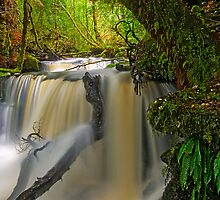 Angel Creek,Weld Valley,Tasmania by Kip Nunn