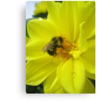 furry bee Canvas Print