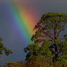I can sing a rainbow by Anne van Alkemade