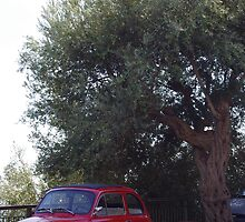 Fiats & Olives by Hollyis