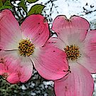 Dogwood  by Mechelep
