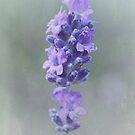 Lavender by OpalFire