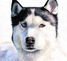 Husky Blue by Nicole Zeug