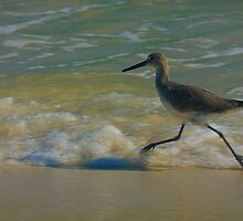 No, I Am Not The Roadrunner by Brenda Burnett