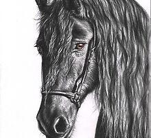 Black Pearl - Friesian Stallion by Nicole Zeug