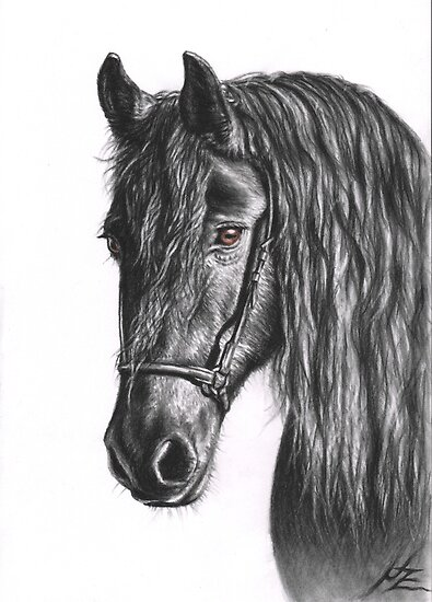 Black Pearl - Friesian Stallion by Nicole Zeug