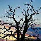 Tree of Silhouette by Neil  Pickin