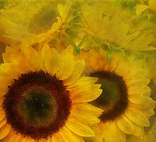 soft sunflowers by Tamara  Kaylor