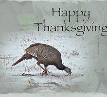 Thanksgiving Card - Wild Turkeys by MotherNature