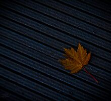 Fall Leaf by Theodore Black