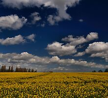 Field Of Dreams by Stuart Chapman