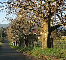 Down Hockey's Lane.   (Cambewarra, NSW) by Lunaria