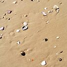 Little Shells on The Sand by -aimslo-