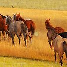 Range Horses, Montana photo by Donna Ridgway by Donna Ridgway