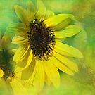 sunflowers by Teresa Pople