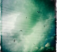Birds on a Wire by kibishipaul