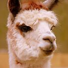 Oh Yea...I'll See It When I Believe It...Llama - NZ by AndreaEL