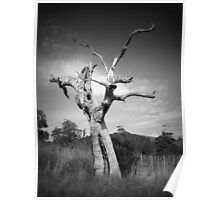 Scary Tree- Southern Vales Poster