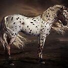 Leopard Appaloosa by Shanina Conway
