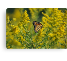 Monarch of Goldenrod Canvas Print