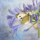 fragile beauty by Teresa Pople