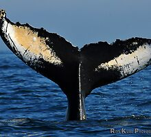 Humpback Whale Fluke by Ron Kube