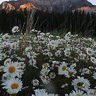 Sunrise at Banff 3 by Brett Hanavan